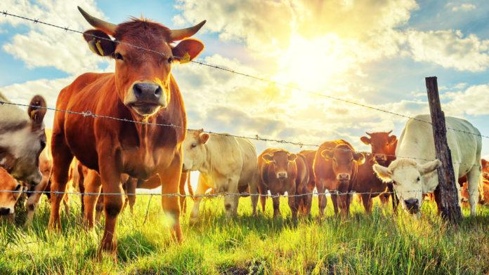 Environmental Benefits of Reducing Dairy