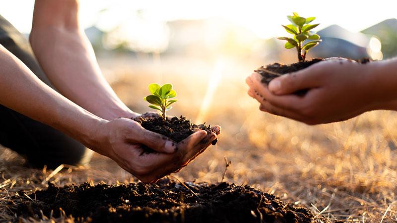 sustainable gift ideas tree