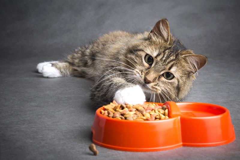 eco friendly pet food