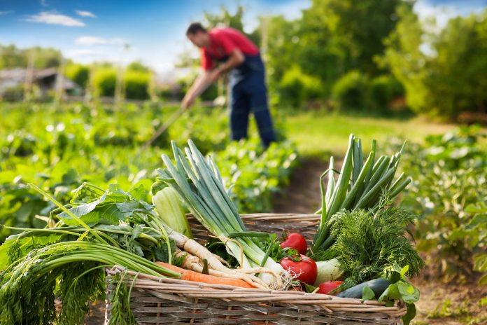 sustainability benefits of gardening
