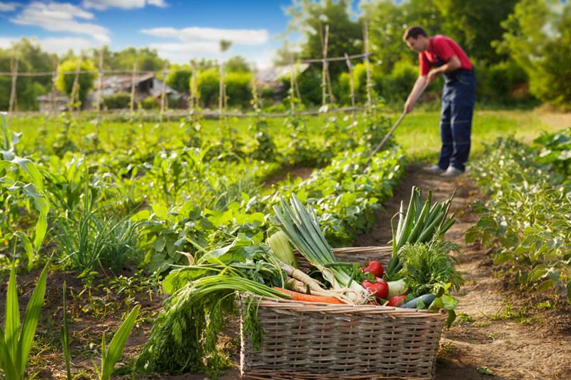 Self-Sufficient Lifestyle garden