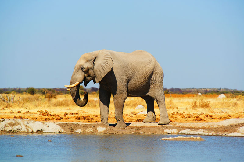botswana eco tourism