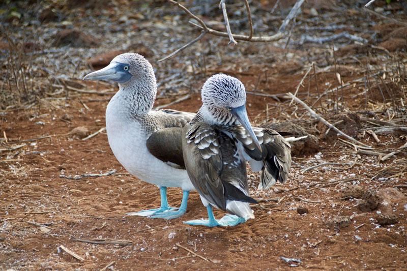 galapagos islands eco tourism
