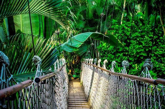 carbon emissions rainforest