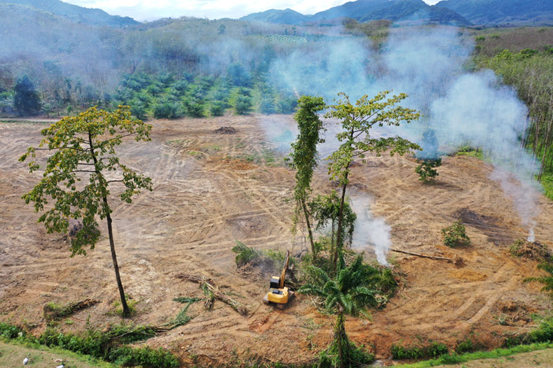 Sustainable-Palm-Oil-2