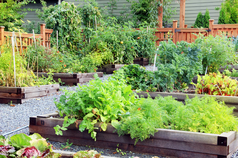 how-to-start-community-garden-3