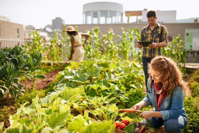 how-to-start-community-garden-main