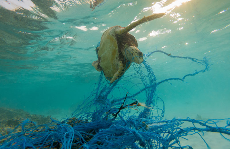 impacts eating seafood net pollution