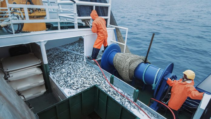 impacts eating seafood overfishing