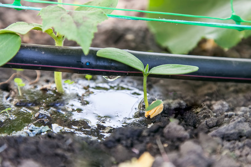 water saving lawn and garden drip