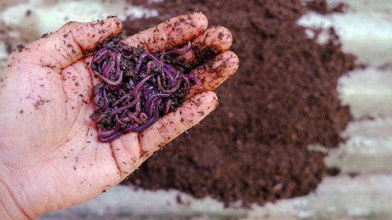 diy compost bin vermicompost