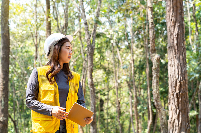 sustainability jobs forest worker